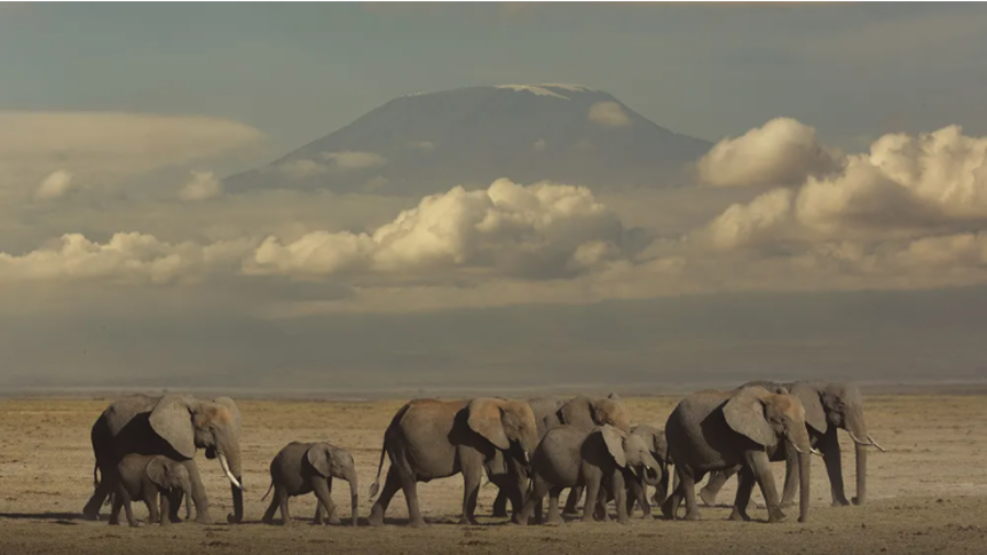 Cle de Fa - Elephant